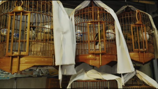 cages with birds for sale at yuen po st bird garden, hong kong - tier in gefangenschaft stock-videos und b-roll-filmmaterial