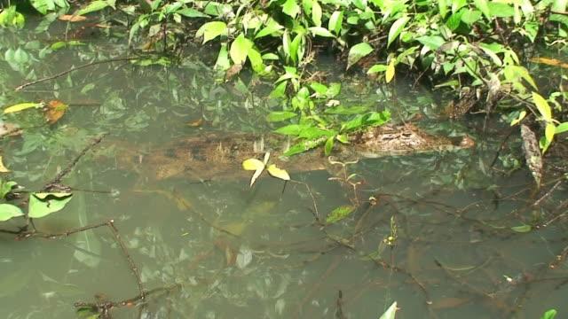 カイマンの植物 - カイマン点の映像素材/bロール
