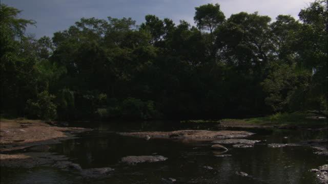 caimans lie in a small stream. - カイマン点の映像素材/bロール