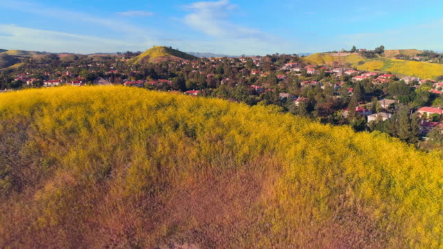 vídeos de stock e filmes b-roll de calabasas city behind the hills covered by flowers in santa monica mountains, los angeles county, california, usa. aerial video with low-altitude flight and forward camera motion. - sul da califórnia