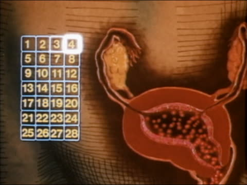 1985 animation calendar counting days of menstrual cycle next to diagram modelling flow - weibliche figur stock-videos und b-roll-filmmaterial