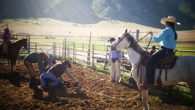 calf branding on ranch - cowboys and cowgirls in action - cattle stock videos & royalty-free footage