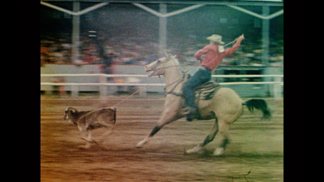 1958 calf roping at a rodeo - kalb stock-videos und b-roll-filmmaterial