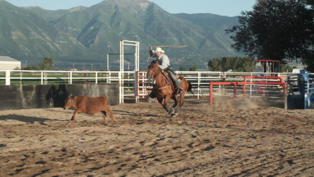 kalb roping cowboy - kalb stock-videos und b-roll-filmmaterial