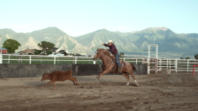 calf roping cowboy - rodeo stock videos & royalty-free footage