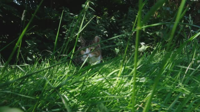 calico cat in long grass - catherine macbride stock videos & royalty-free footage