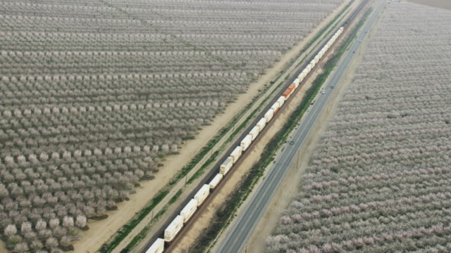 usa, california: almond trees around road and railroad - almond stock videos & royalty-free footage
