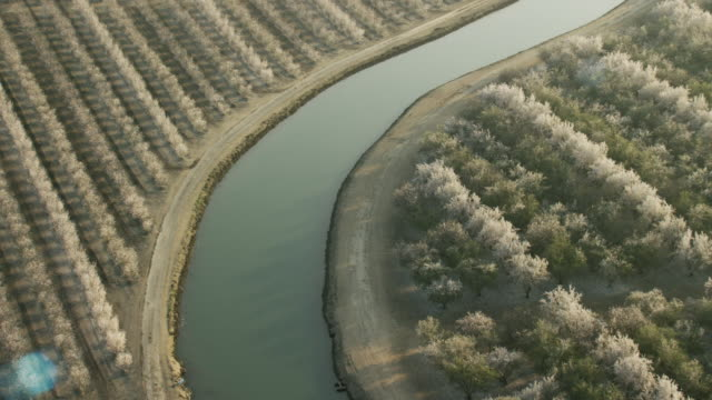 USA, California: Almond trees around water canal