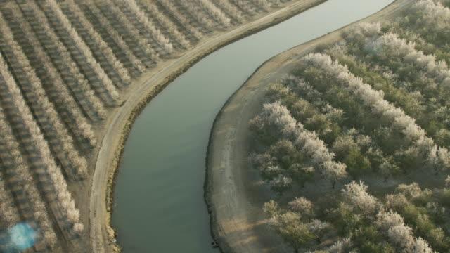 usa, california: almond trees around water canal - アーモンド点の映像素材/bロール