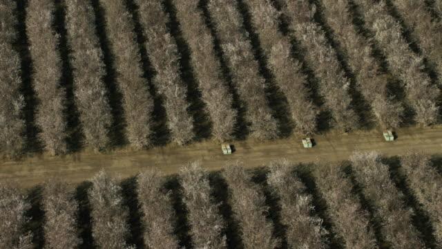 usa, california: almond trees fields - アーモンド点の映像素材/bロール