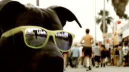 California Beach Dog