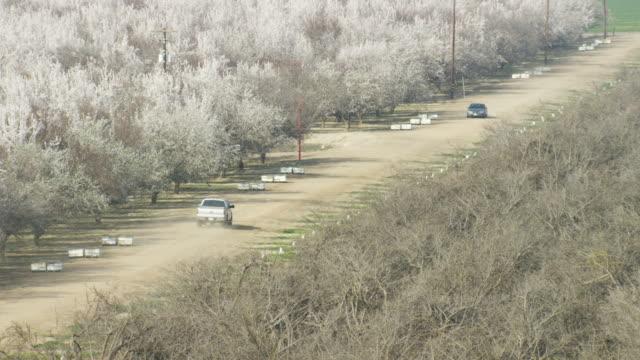 usa, california: cars in almond trees fields - アーモンド点の映像素材/bロール