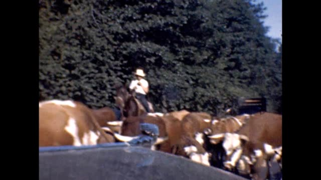 1947 california cattle drive - cattle drive stock videos & royalty-free footage