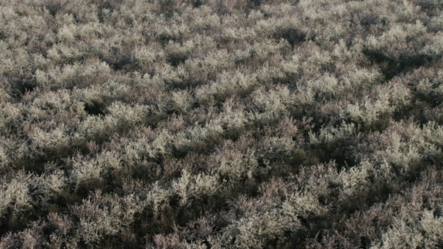 USA, California: Close up on almond trees