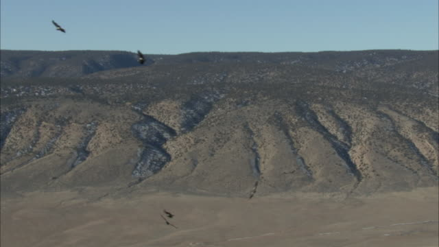 california condor birds flying over hilly terrain - california condor stock videos and b-roll footage