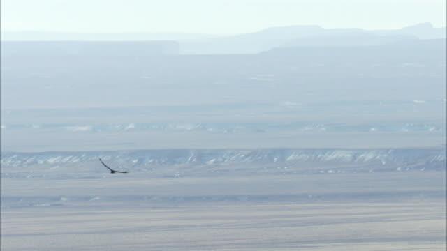 california condor flies above hazy skyline - california condor stock videos and b-roll footage