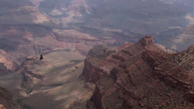 california condor in grand canyon wide - california condor stock videos and b-roll footage