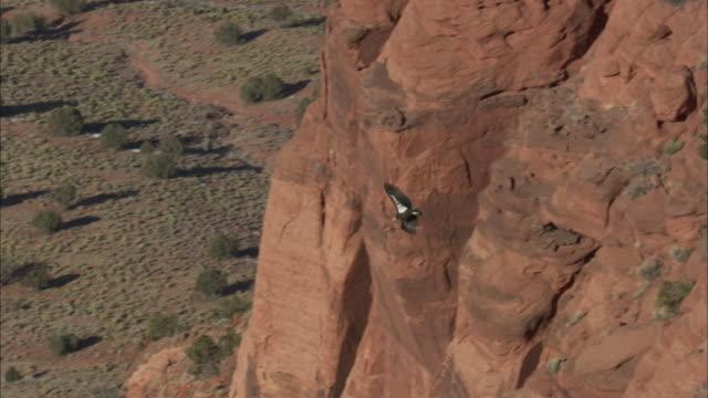 california condor soars above red rock face - california condor stock videos and b-roll footage