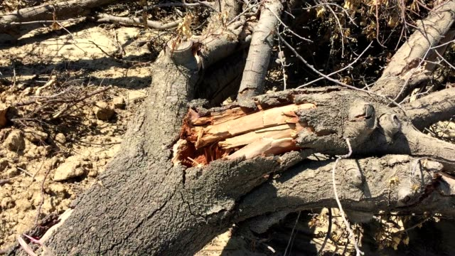 california drought - dry stock videos & royalty-free footage