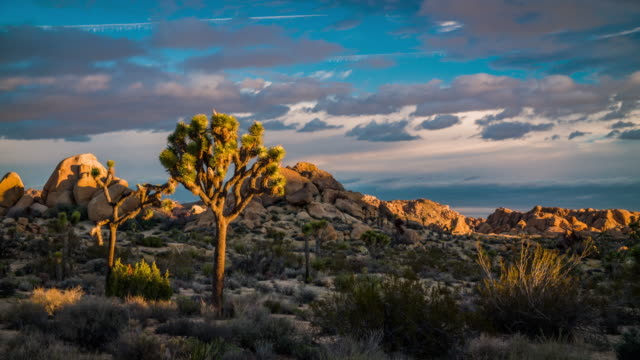 vidéos et rushes de usa, californie, joshua tree national park - aride