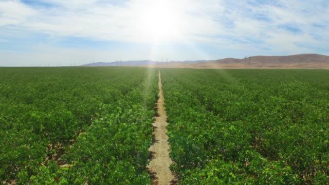 california orange orchard in drought rising jib shot - オレンジ果樹園点の映像素材/bロール