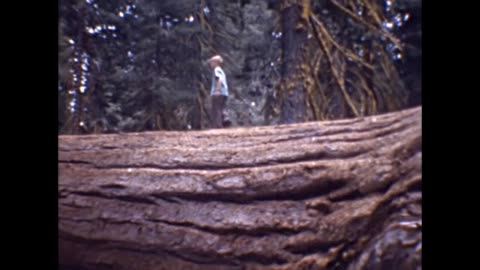 1947 california redwoods family vacation - sequoia stock videos & royalty-free footage