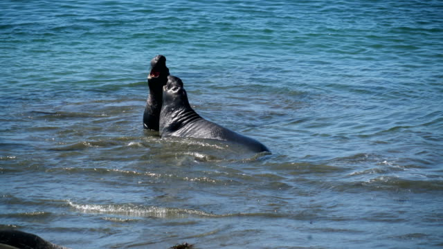 california road trips - seal animal stock videos & royalty-free footage