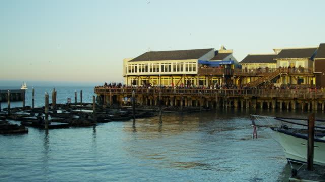 california sea lions pier 39 san francisco bay - pier 39 san francisco stock videos & royalty-free footage