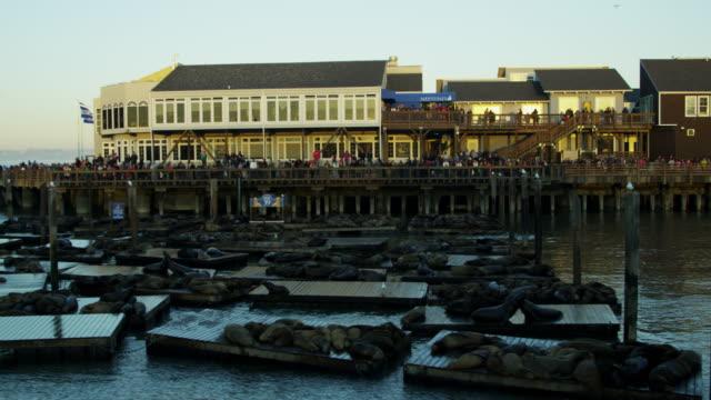 california sea lions pier 39 tourist san francisco - pier 39 san francisco stock videos & royalty-free footage