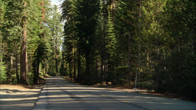 ms, usa, california, shaver lake, road in forest - western usa stock videos & royalty-free footage