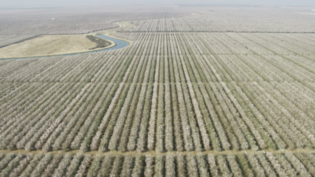 USA, California: Wide shot of almond trees around water canal