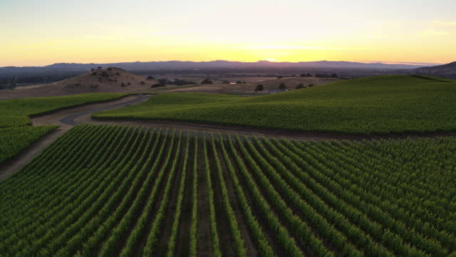 California Wine Country at Sunset - Drone Shot
