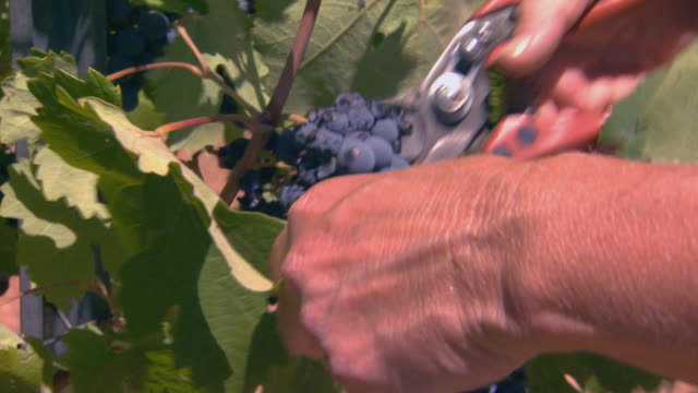 california, yosemite - pruning shears stock videos & royalty-free footage