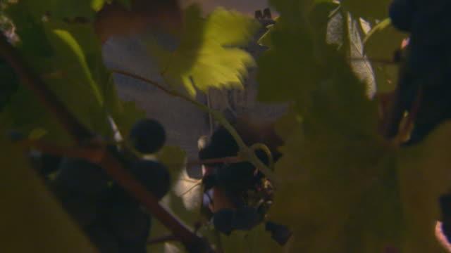 california, yosemite - secateurs stock videos & royalty-free footage