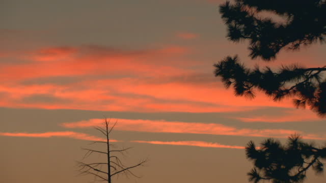 vidéos et rushes de california, yosemitesky at sunset - membres du corps humain