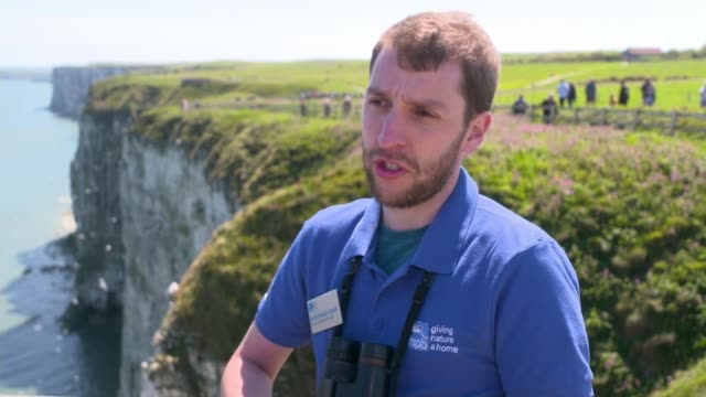 rspb calls on birdwatchers to help track puffin decline england yorkshire chalk cliffs scott davisonsmith setup shots and interview sot cutaway... - bird watching stock videos & royalty-free footage