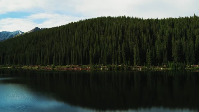 calm lake against pine woodland - evergreen stock videos & royalty-free footage