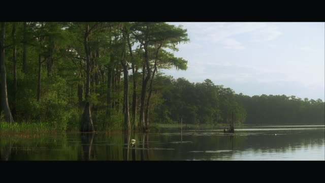 ws calm lake surrounded by trees - letterbox format stock videos & royalty-free footage