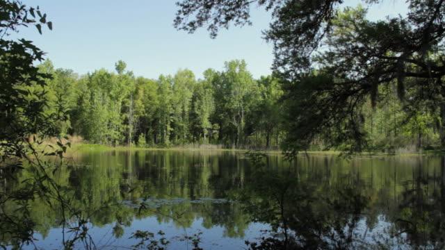 WS Calm lake surrounded with trees / Madison, Florida, USA