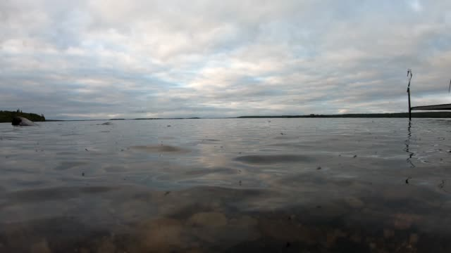 calm lakeshore scenes - lakeshore stock videos and b-roll footage