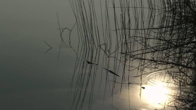 calm lakeside at dawn, scotland - loch stock videos & royalty-free footage