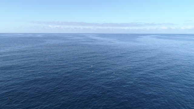 Calm ocean aerial in the morning, forward move