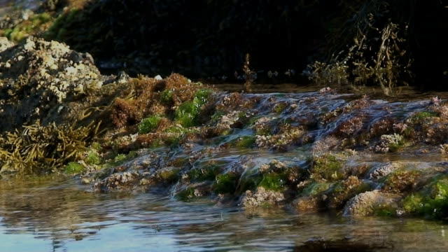 Calm Water Flowing Over Mossy Coral
