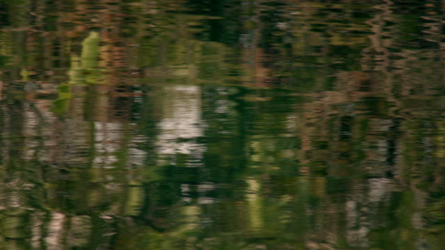 calm waters of the florida everglades - refraction stock videos & royalty-free footage