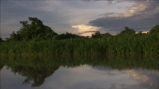 calm wetlands reflect grasses and gray sky. - marsh stock videos & royalty-free footage
