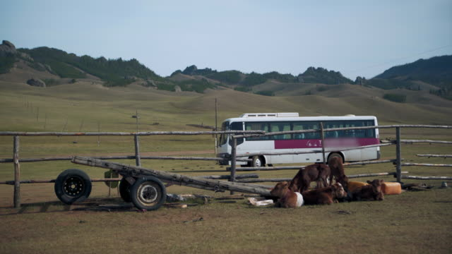 calves sitting by fence with bus on land against sky - ulaanbaatar, mongolia - mongolia video stock e b–roll