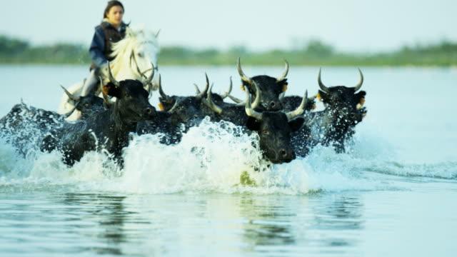 vídeos de stock e filmes b-roll de camargue bull animal livestock horse running sea cowboy - touro animal macho