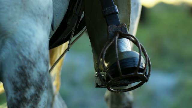 camargue bull animal wildlife drover running cowboy travel - animal leg stock videos & royalty-free footage