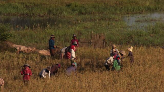 Cambodia: Rice farmers