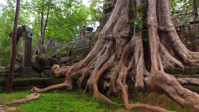 cambodian forest ruin - old ruin stock videos & royalty-free footage